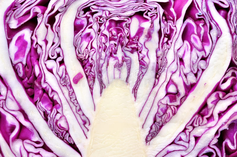 Middle head of red / purple cabbage. A sliced down the middle head of red / purple cabbage royalty free stock photography