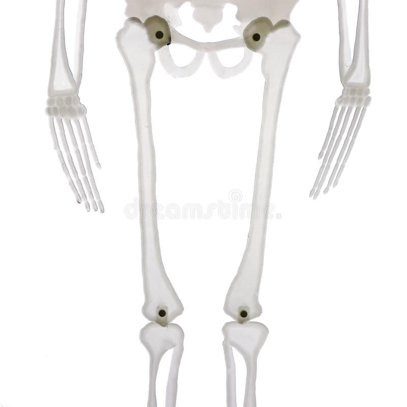 Middle part of skeleton isolated