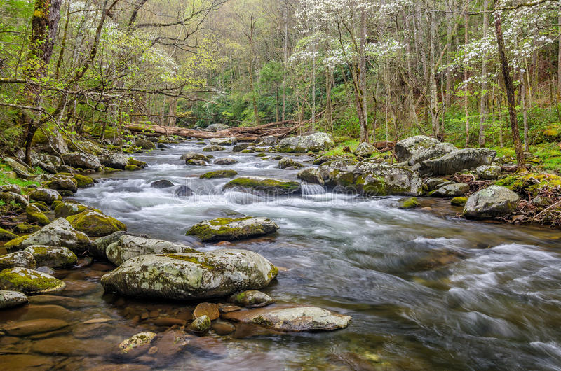 Middle Prong of the Little River, Great Smoky Mountains. Blooming dogwood trees along the Middle Prong of the Little River in the Great Smoky Mountain National stock photo