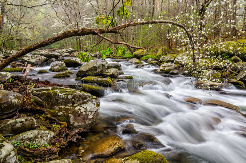 Middle Prong of the Little River, Great Smoky Mountains. Blooming dogwood trees along the Middle Prong of the Little River in the Great Smoky Mountain National stock photos