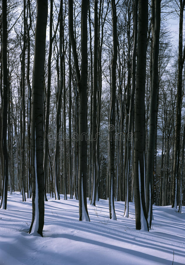 Download In The Middle Of The Snowy Trees Stock Photo - Image: 18690212
