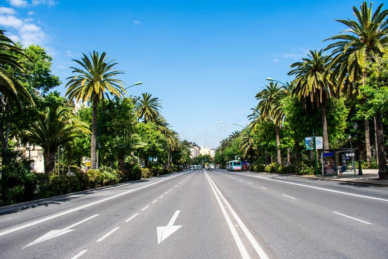The middle of a two lane road lined with palm trees. On a sunny, summers day stock photos