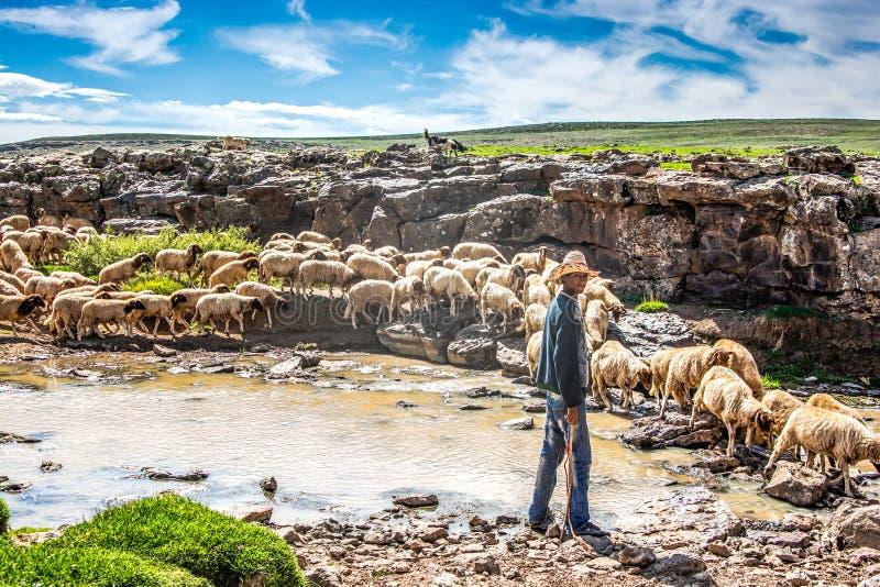 Midelt, Marruecos - 4 de octubre de 2013 Pastor de las ovejas que caza ovejas en montañas foto de archivo libre de regalías