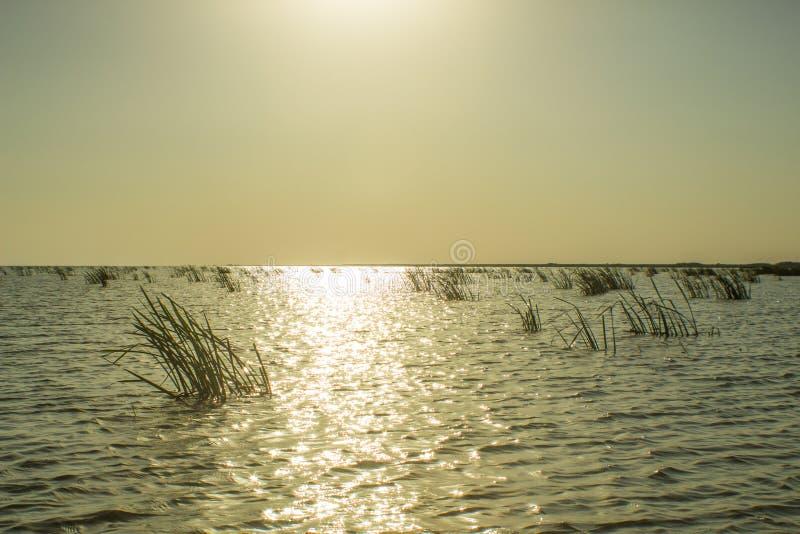 Midi élevé sur les eaux de delta de Danube photographie stock
