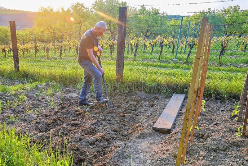 Midle alterte grabenden Boden des Mannes mit Gartengabel Reifer Mann im Garten Gartenarbeit- und Hobbykonzept lizenzfreies stockfoto