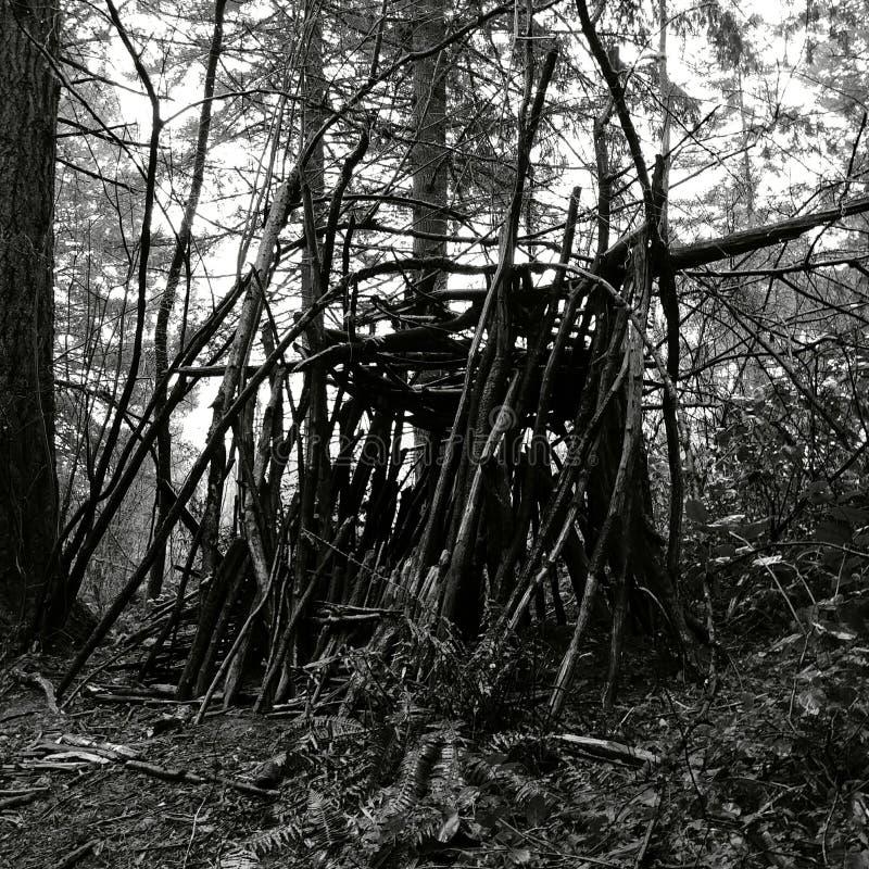 Midnight kabina w drewnach zdjęcia royalty free