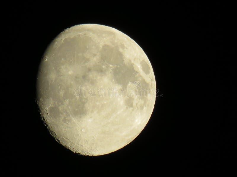 Midnight księżyc nad Hatfield lasem fotografia royalty free