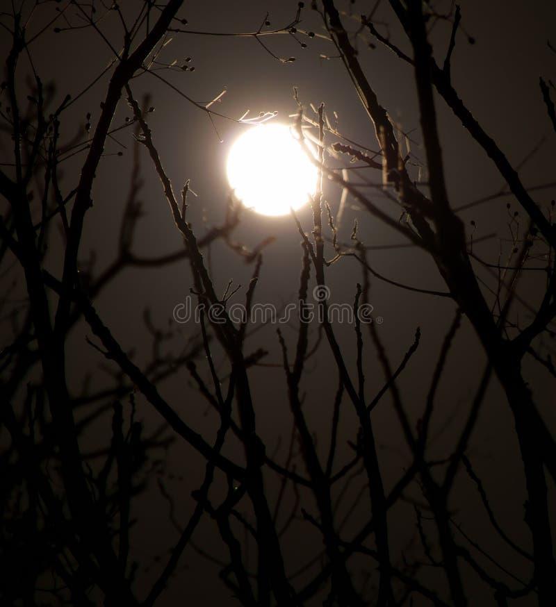 Midnight Moon stock photo