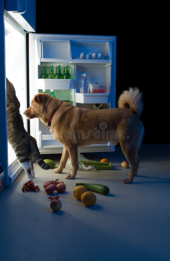 Midnight snacks. Cat and Dog searching for meat in the refrigerator