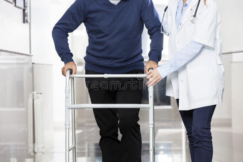 Midsection человека доктора Assisting старшего с ходоком стоковая фотография rf