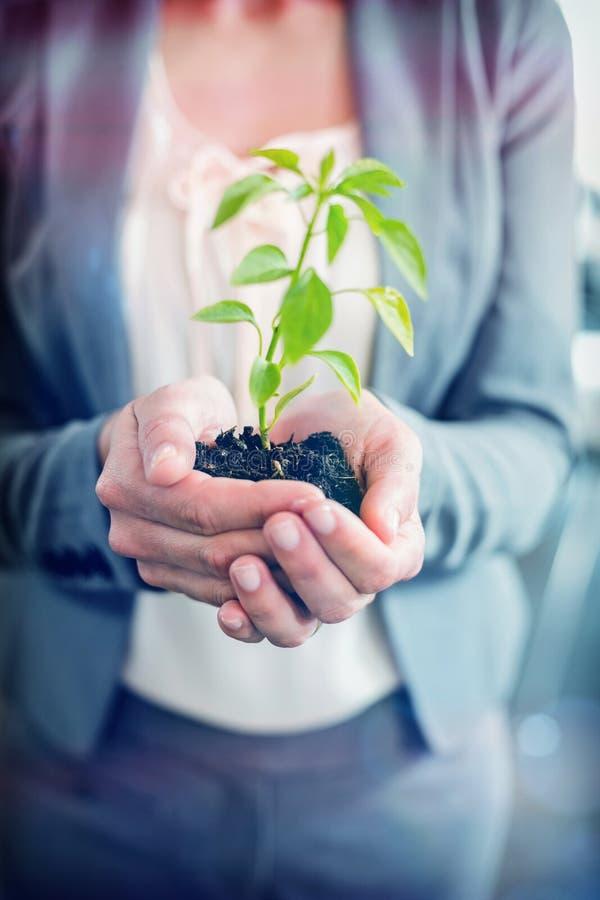 Midsection bizneswomanu mienia roślina zdjęcia royalty free