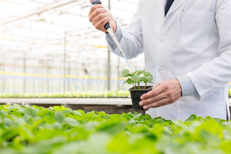 Midsection del bioquímico de sexo masculino que usa la pipeta en almácigo en cuarto de niños de la planta fotos de archivo libres de regalías