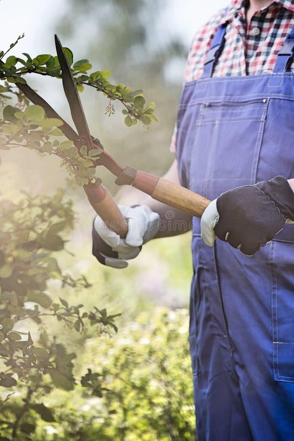 Midsection ogrodniczka arymaż rozgałęzia się przy rośliny pepinierą obrazy royalty free