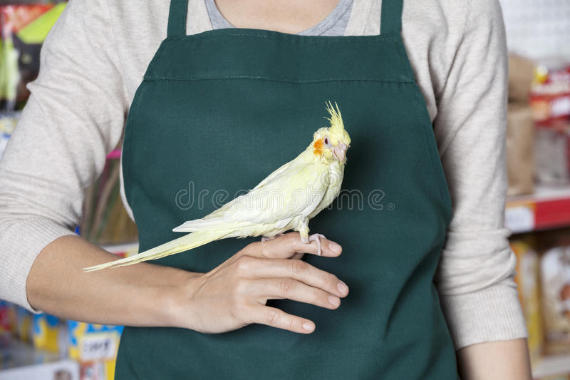 Midsection Of Saleswoman With Cockatiel stock image
