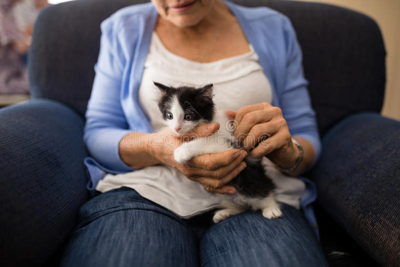 Midsection of senior woman stroking kitten while sitting on armchair royalty free stock photo