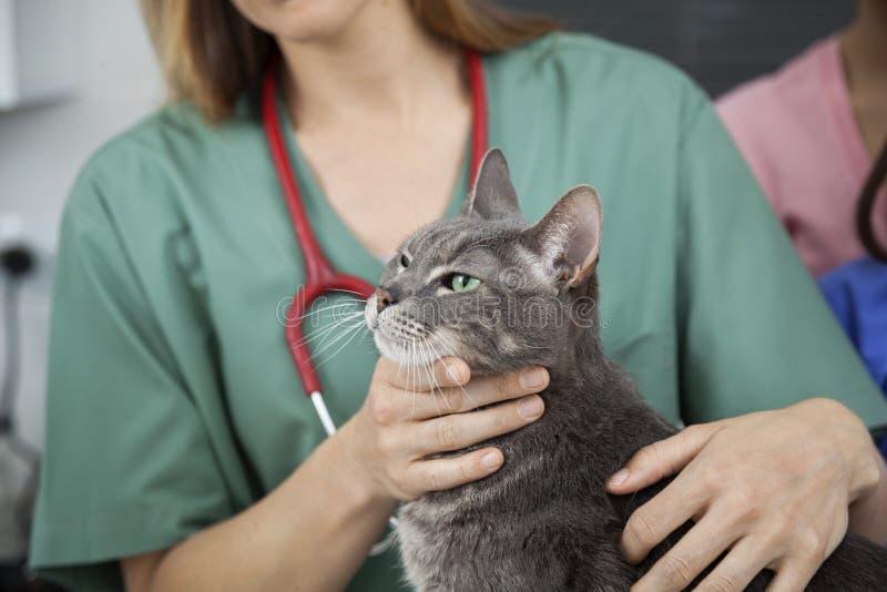 Midsection van Arts Touching Cat royalty-vrije stock fotografie