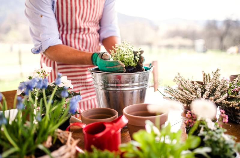 A midsection of young man gardener outdoors at home, planting flowers. stock photography