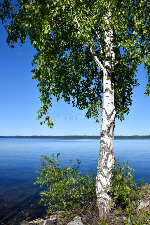 Midsummer nature in Finland. Midsummer nature at the blue Lake Puruvesi in Eastern Finland stock image
