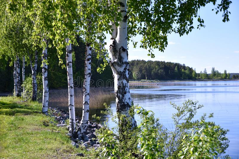 Midsummer nature in Finland. Midsummer nature at the blue Lake Puruvesi in Eastern Finland royalty free stock photo