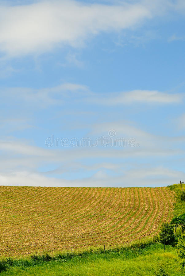 Midwest Crop Field Stock Photo. Image Of Farmland, Crop