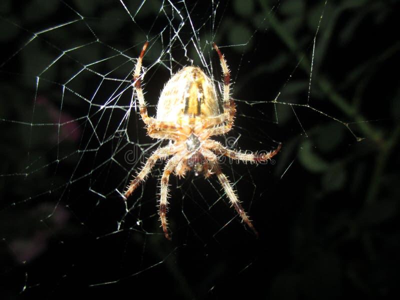 Miedo de arañas imagenes de archivo