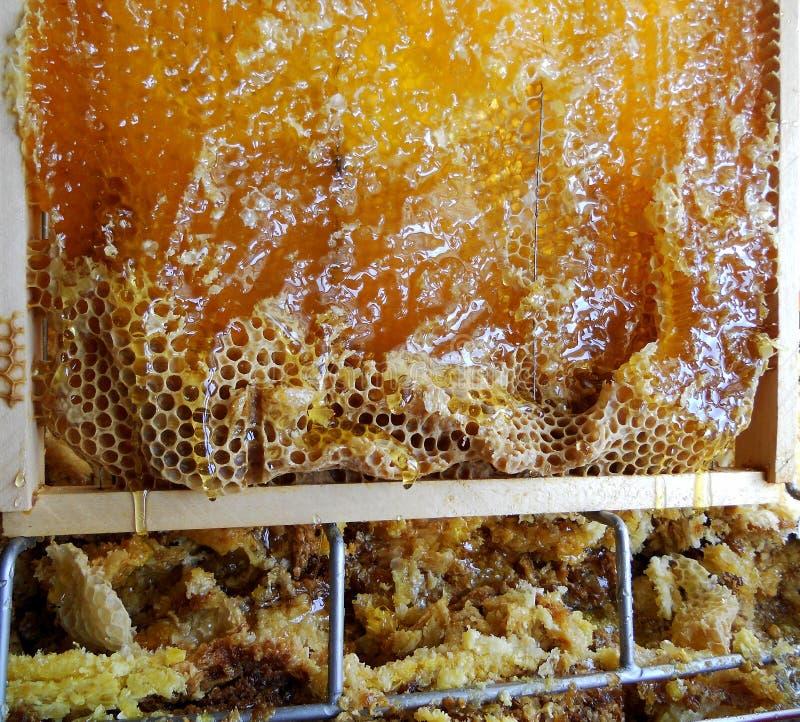 Download Miel imagen de archivo. Imagen de fresco, miel, líquido - 100527049