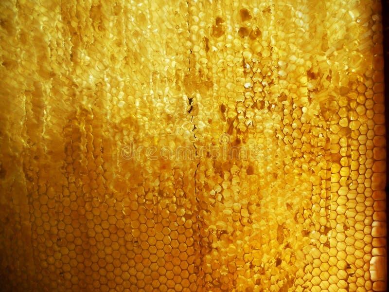 Download Miel foto de archivo. Imagen de apiarist, hexágono, líquido - 100527358