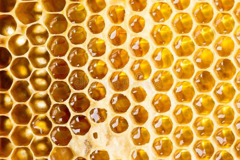 Miel dans le cadre images stock
