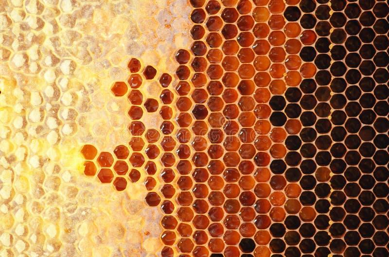 Miel dans le cadre image stock