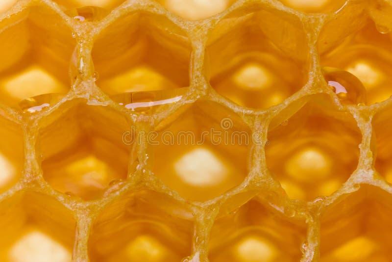 Miel en nid d'abeilles image libre de droits