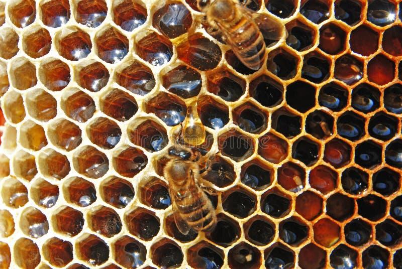 Miel en nids d'abeilles. image libre de droits