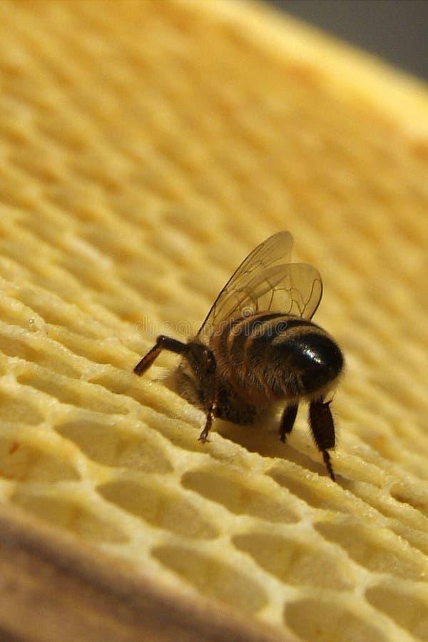 Download Miel Frais Dans La Texture De Peigne Image stock - Image du agriculture, honeycomb: 87701919