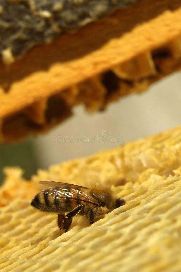 Download Miel Frais Dans La Texture De Peigne Image stock - Image du apiculture, longueur: 87702059