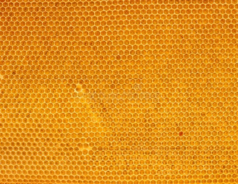 Miel fresca en peine imagen de archivo