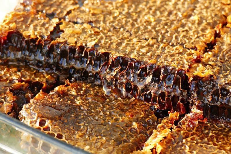 Miel naturel pour le petit déjeuner, images en gros plan de miel approprié de nid d'abeilles pour faire de la publicité, image stock