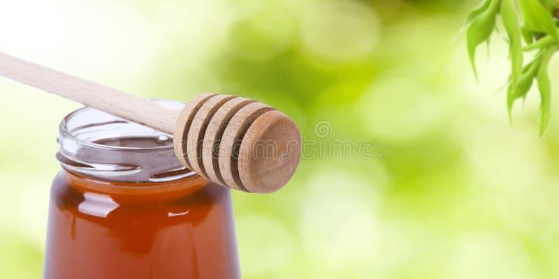 Miel naturel sur le vert de nature image stock