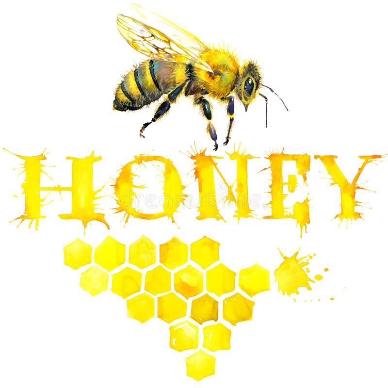 Miel, nid d'abeilles, abeille douce watercolor illustration stock