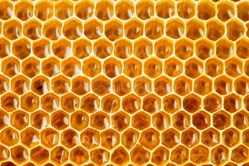 Miel sain d'abeille de nourriture en nid d'abeilles image libre de droits