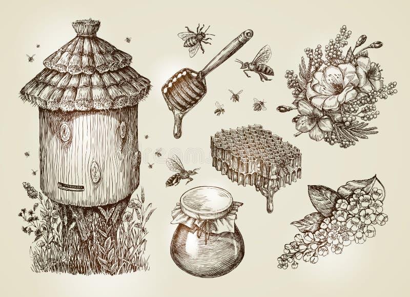 Miel tiré par la main, l'apiculture, abeilles Illustration de vecteur de croquis de vintage de collection illustration de vecteur