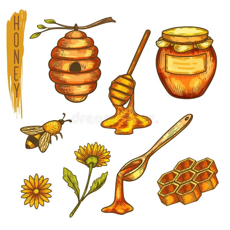 Miel y abeja, panal y colmena, cuchara de la apicultura stock de ilustración