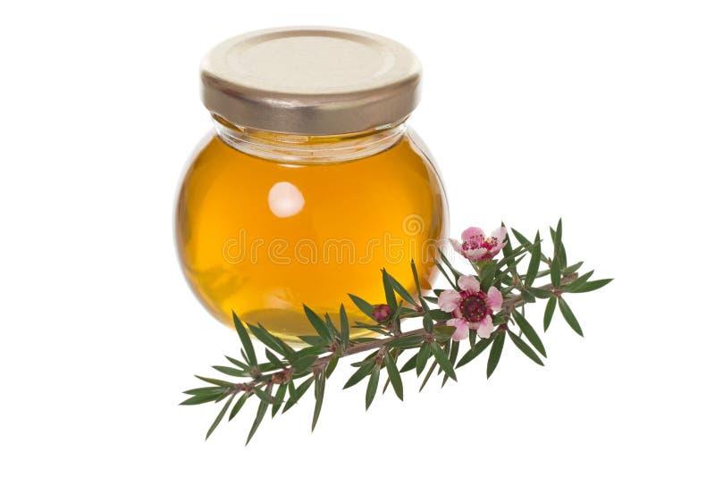 Miele con il fiore di manuka (Leptospermum) fotografia stock libera da diritti