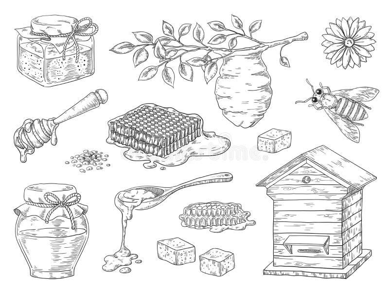 Miele disegnato a mano Elementi d'annata di schizzo del barattolo del favo e del miele dell'ape, fiori di scarabocchio e cera d'a illustrazione di stock