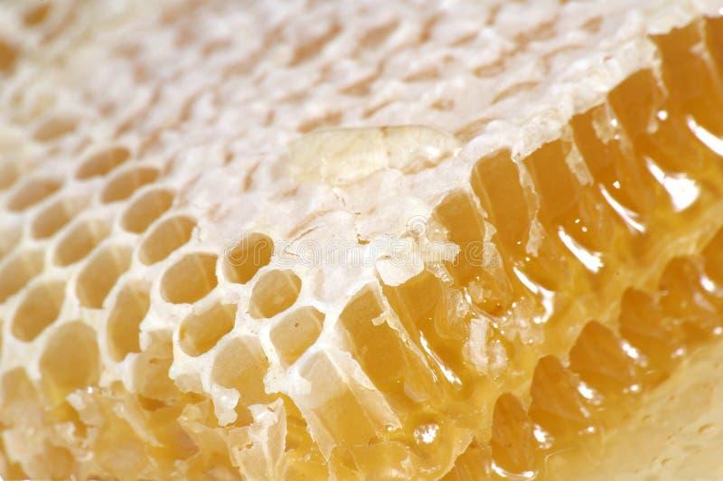 Miele in favo immagine stock libera da diritti