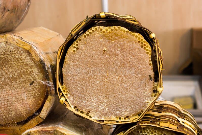 Miele fresco nel telaio sigillato del pettine immagini stock libere da diritti