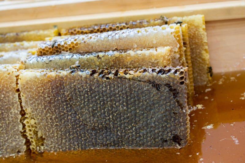 Miele fresco nel telaio sigillato del pettine fotografie stock