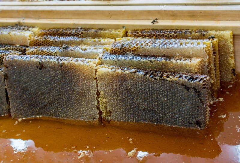 Miele fresco nel telaio sigillato del pettine immagine stock libera da diritti