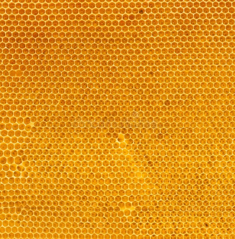 Miele fresco nella struttura naturale del pettine fotografia stock libera da diritti