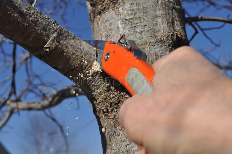 Miembro de árbol que es podado correctamente imagen de archivo libre de regalías