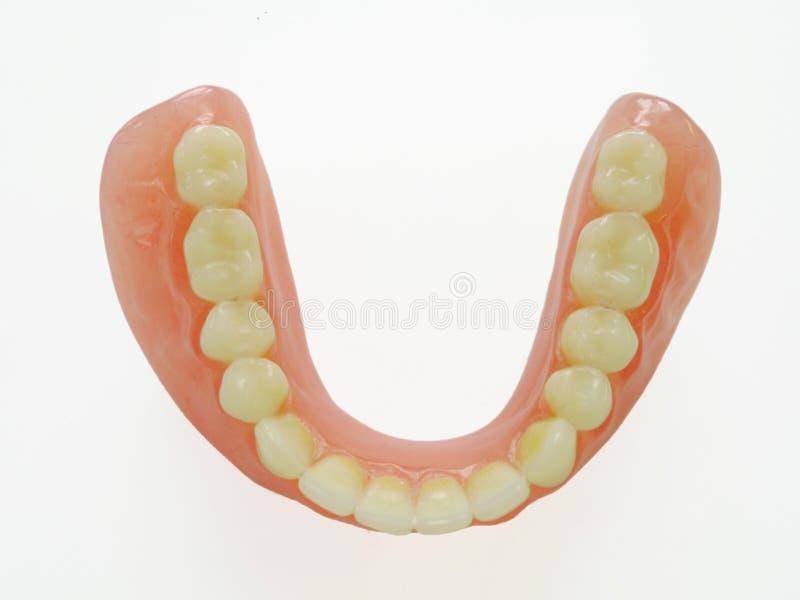 Miembro de la dentadura fotografía de archivo libre de regalías