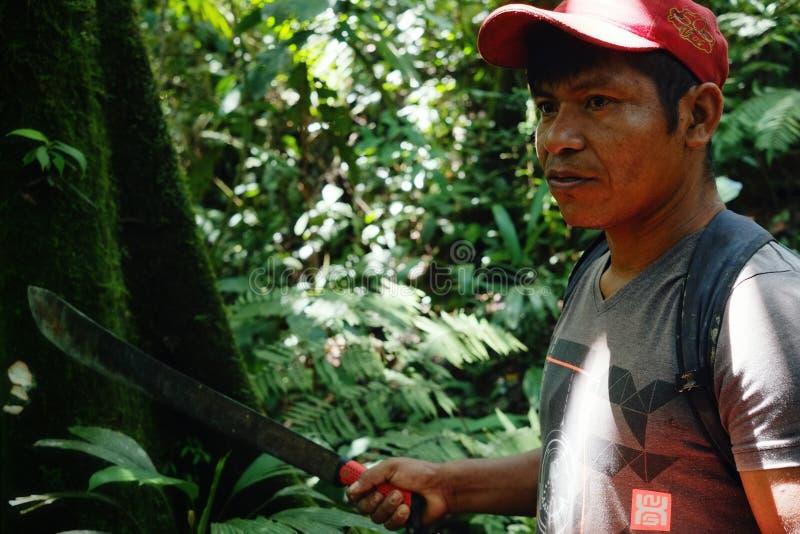 Miembro tribal del ticuna local que busca un registro para caer en el medio de la selva tropical fotos de archivo libres de regalías